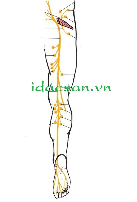 massage gan bàn chân